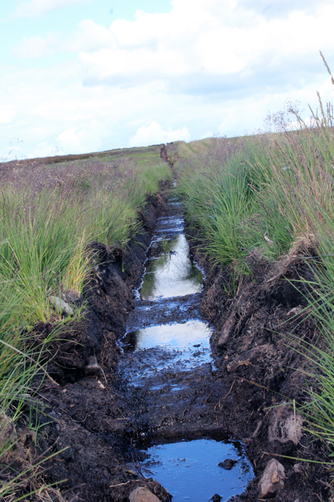 Drainage ditches on Bingley Moor