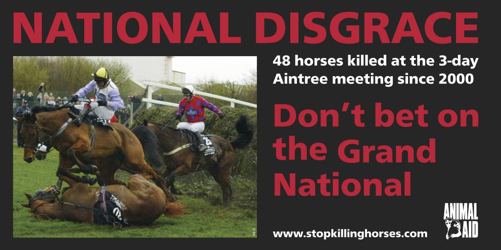 Grand National 48 deaths