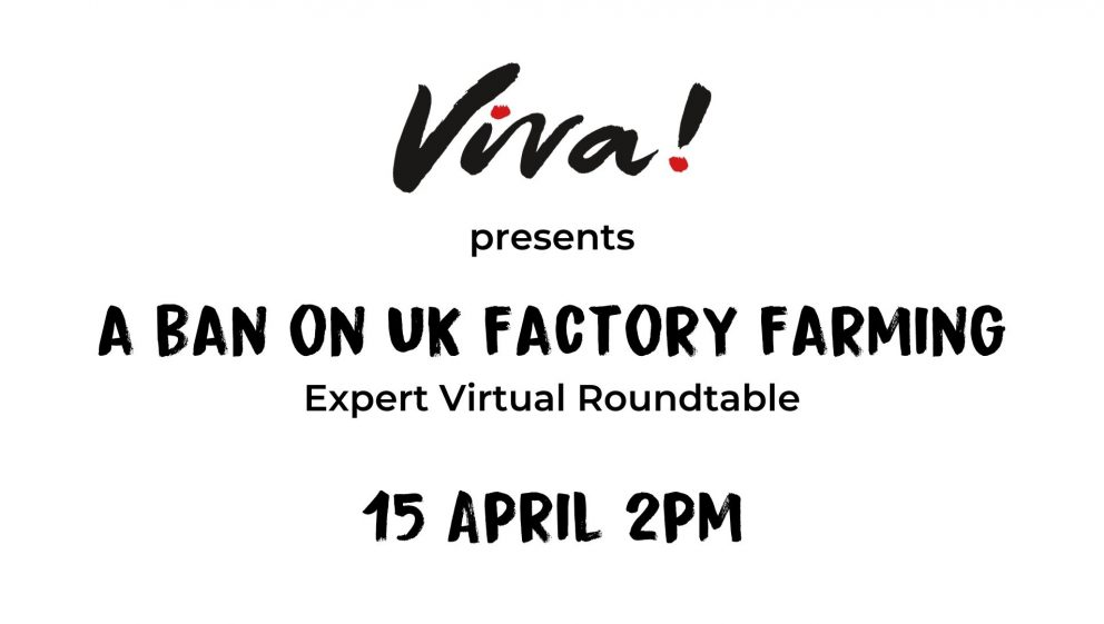 Viva! Ban UK Factory Farming webinar